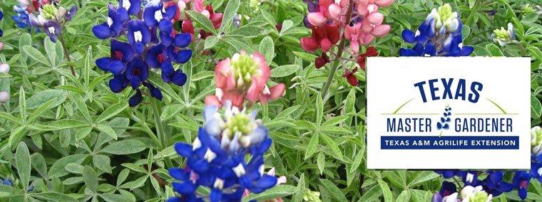 Orange County Master Gardeners to Hold Master Gardener Certification Class