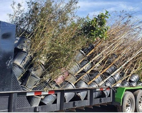 Keep Orange County Beautiful Receives Canopy Trees