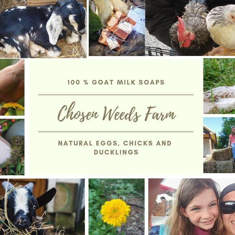 Chosen Weeds Farm Hosting Family Homesteading Classes